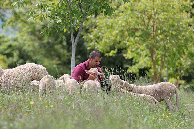 Borgo sheep with Farmer Ivan http://www.borgosantopietro.com/en/life-borgo-santo-pietro/borgo-farm/