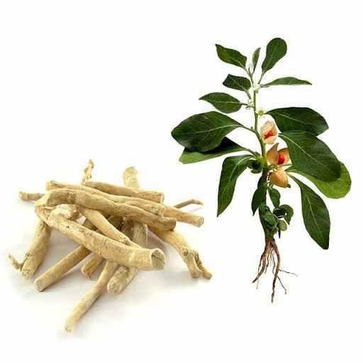 Manfaat Herbal Ashwagandha