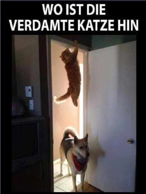 Arme Katze