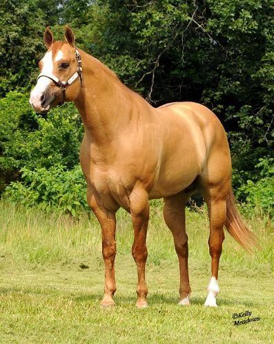 356 best aqha images on Pinterest | Horses, Quarter horses ...