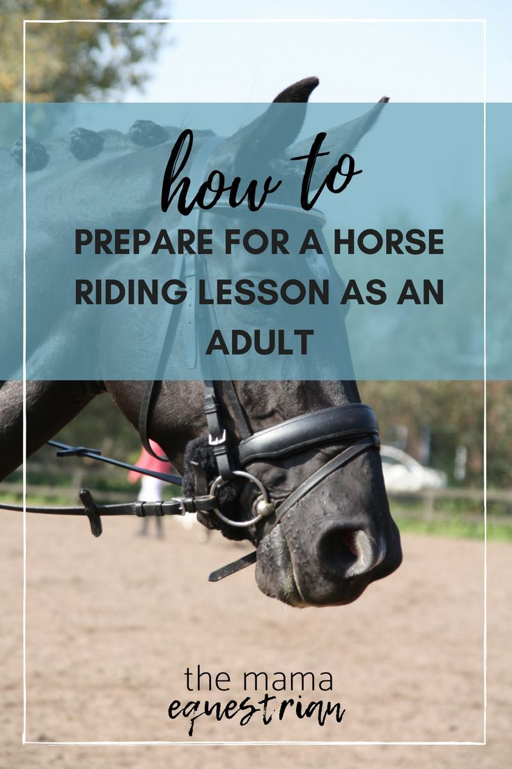 Thanks for Adult horse lesson riding