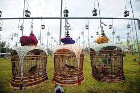 Narathiwat. bird singing contest