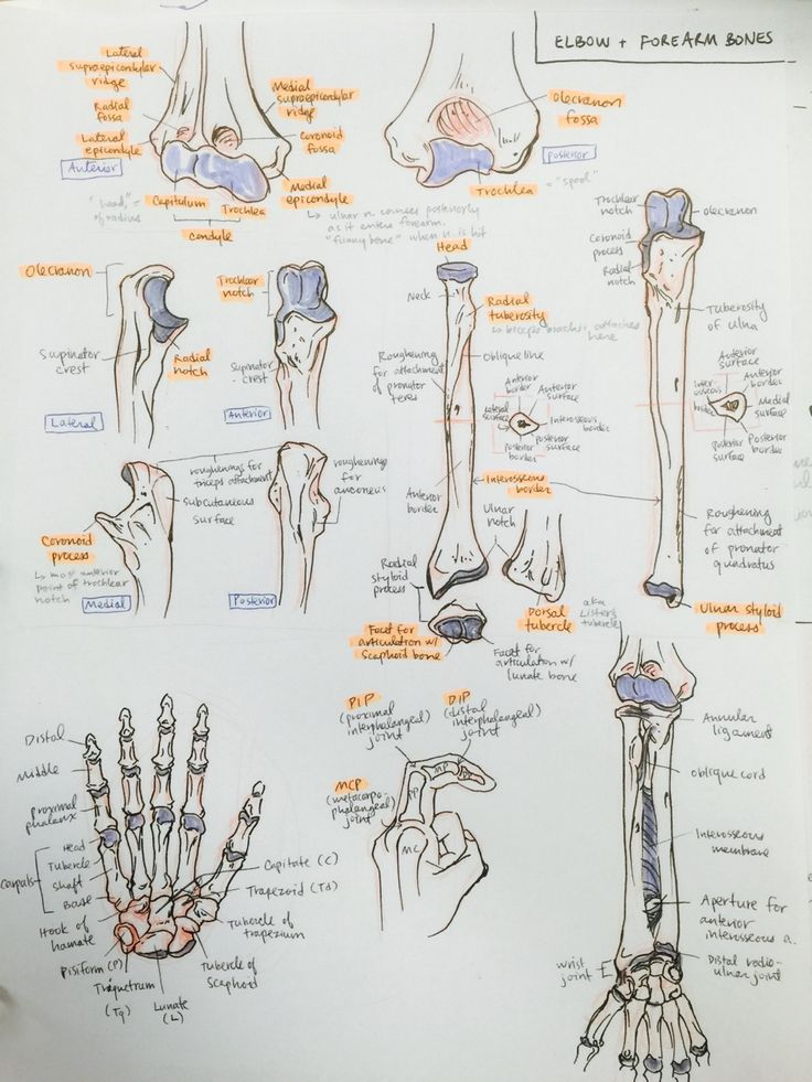 8 best anatomy of human. images on Pinterest | Physical therapy ...