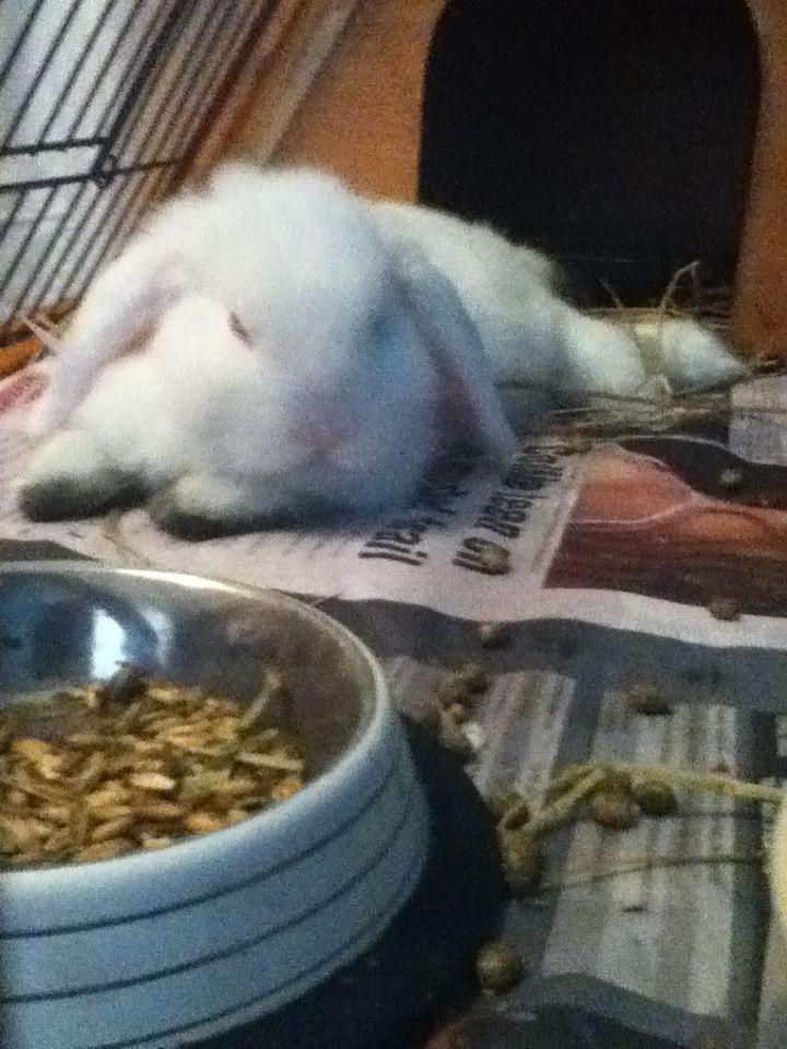 My cute rabbit