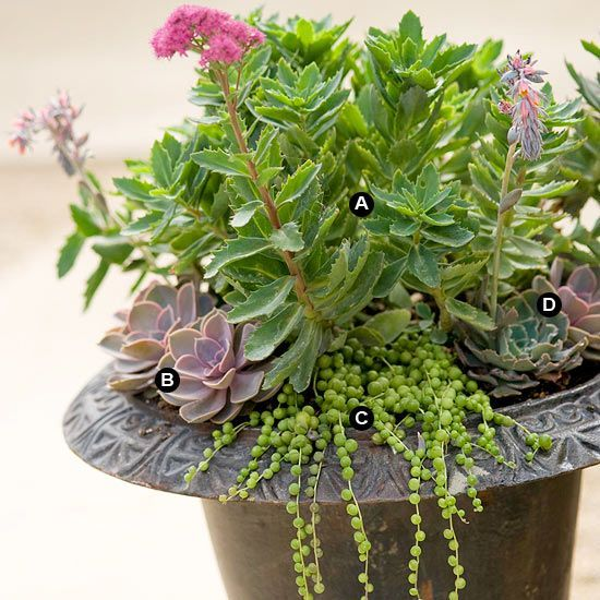 102 best hanging shade baskets planters images on for Succulents that do well in shade