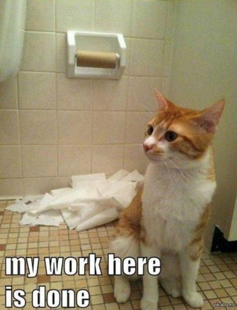 Best Funny Cats Images On Pinterest Funny Animals Feelings - 18 hilarious sad cat problems that might explain why your cats so moody