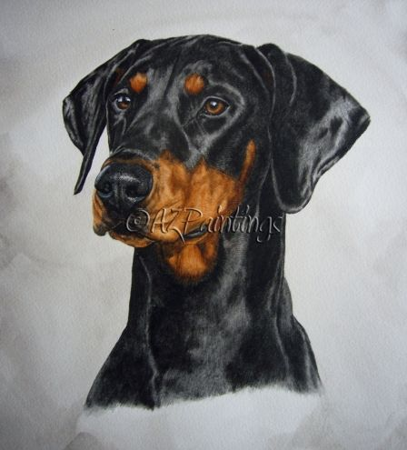 Dobermann - watercolor dog portrait, painting by artist Anne Zoutsos
