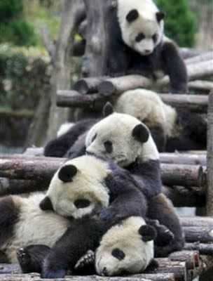 Cute Animals Falling Asleep