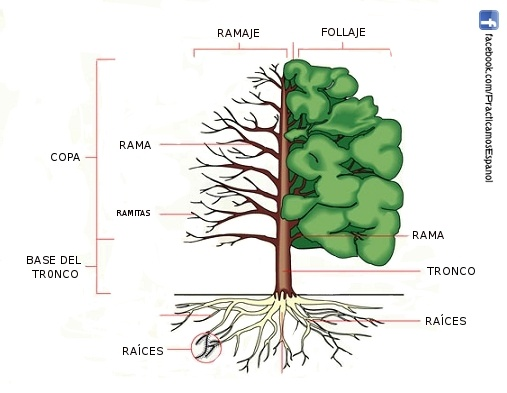Las partes del árbol