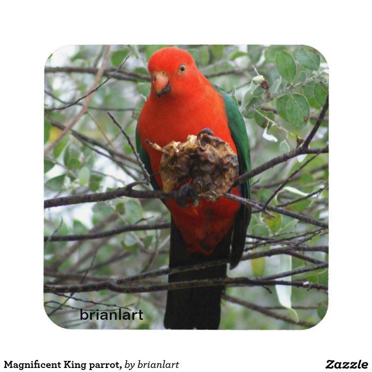 Magnificent King parrot,