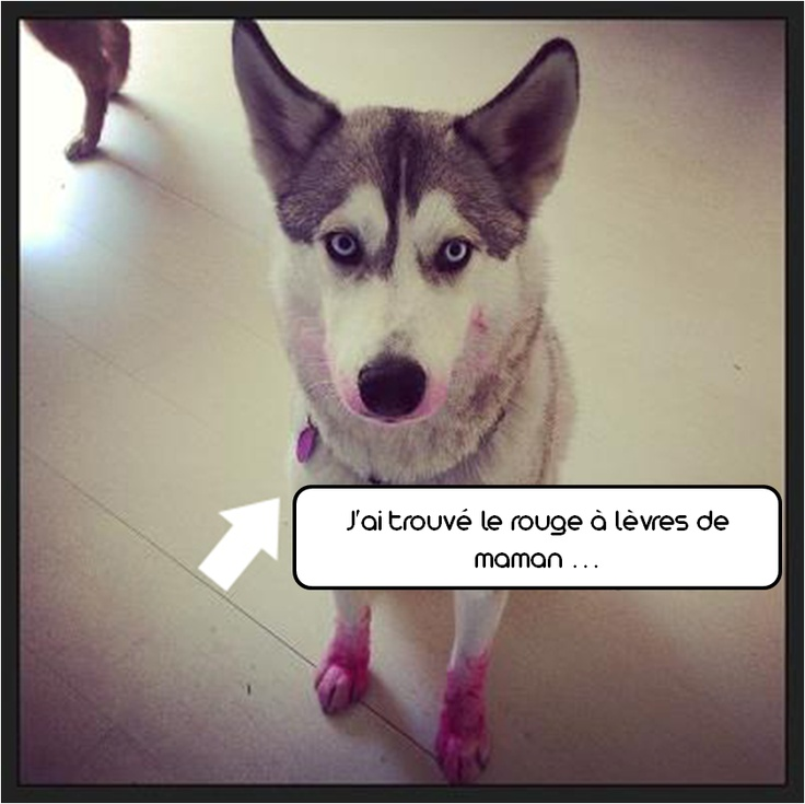 Dog wearing make up ^^  zoomalia