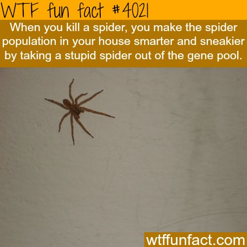Spiders are getting smarter and sneakier - WTF fun facts