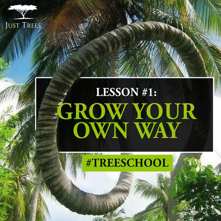 Lesson 1: Grow your own way #TreeSchool