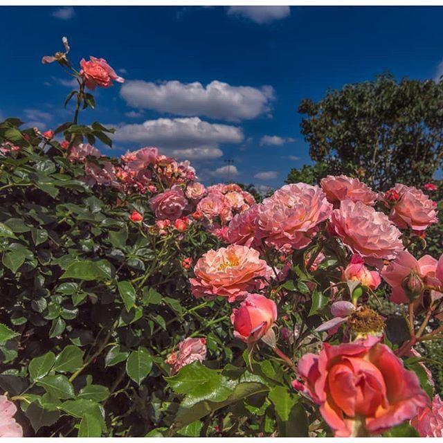 New The 10 Best Garden Ideas Today With Pictures Traumen Im Garten Erfurt Thuringen Turingia Pictures Sony Sigma Amazing Gardens Flowers Garden