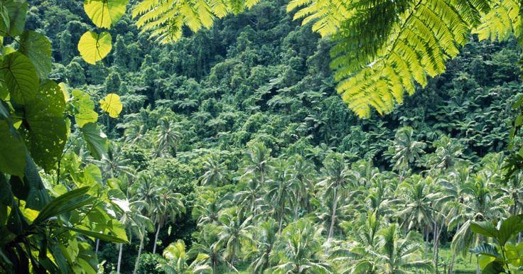 Que roupa usar em uma floresta tropical?. Apesar do entusiasmo e maravilhas que as florestas tropicais oferecem, elas ainda são um lugar perigoso e implacável. Se você pretende embarcar em uma viagem através de uma floresta tropical, deve se preparar cuidadosamente para tudo o que você pode encontrar. Por isso, selecionar a roupa adequada não é exceção. Se você não tem certeza exatamente ...
