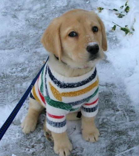 Hudsons Bay puppy sweater  Canadian store including: the Bay, Zellers and Home Outfitters.  @HalfMoonYoga