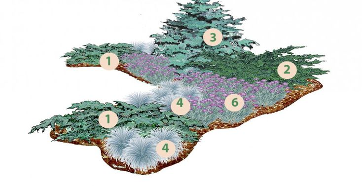 Blue toned conifer composition prostrate juniper & blue spruce//Клумба «Серебристая река»