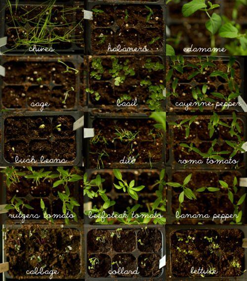 apartment gardening urban gardening herbs garden kindred spirits do do