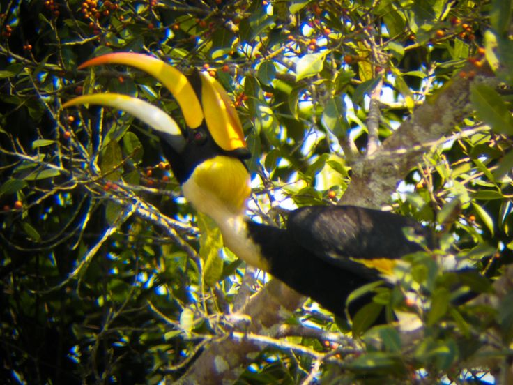kao yai national park www.soiblossom.com