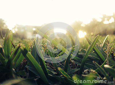 Cool photo of Sunlit Grass in the morning. Buy @ dreamstime.com. By JBugden.