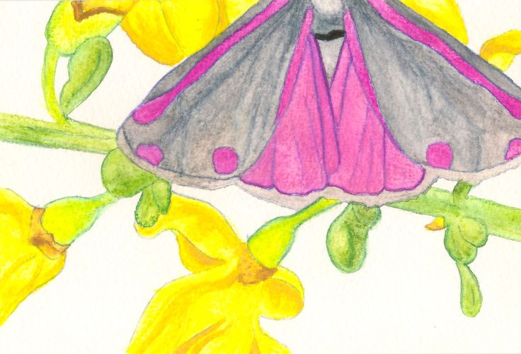 The Moth (II), 2014. Watercolour on paper by Sara Ferrington www.facebook.com/fershaw.art