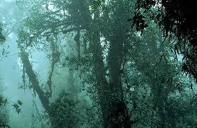 rainforest storms
