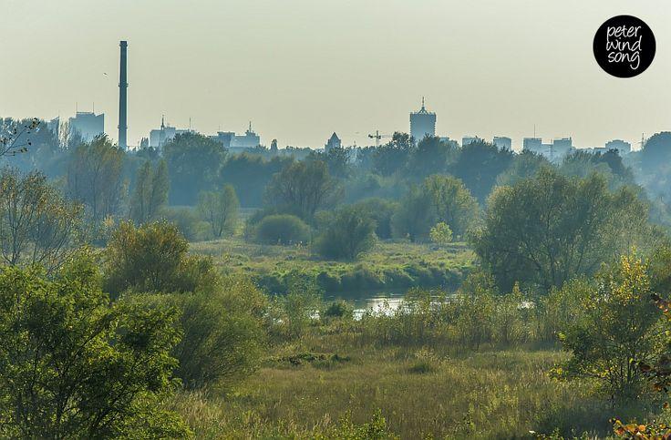 Poznań's skyline.