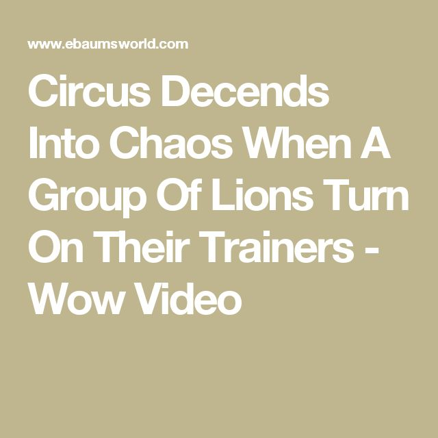 Circus Decends Into Chaos When A Group Of Lions Turn On Their Trainers - Wow Video