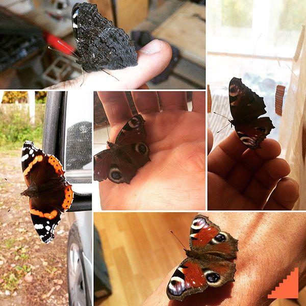 Это очень странное чувство, когда на объектах тебя преследуют бабочки... #природа #красиво #необычно #этоинтересно #бабочка #бабочки #вдохновение #дизайн #стройка #строительство #строитель