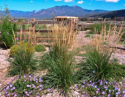 high desert landscaping pictures | High Desert Landscaping: A Taos Experiment in Regenerative Gardening