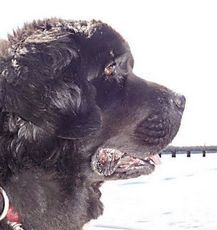 Top Photo18th annual Newfie Fun Days in Eliot The 18th Annual Newfie Fun Days benefiting the Newfoundland dog breed takes place Saturday, Sept. 21 and Sunday, Sept. 22, 9:30 a.m.- 4 p.m. at the Piscataqua Boat Basin, Route 103, Eliot, Maine.