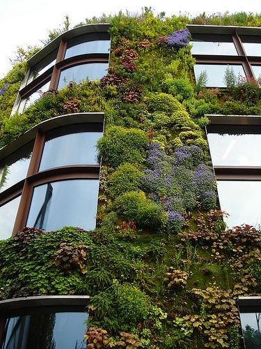 Living Wall. A lovely look for a building. apartment grass wall