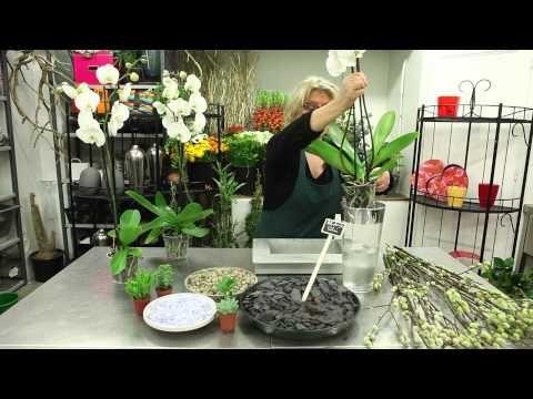 Les 25 Meilleures Id Es De La Cat Gorie Orchid Es Blanches