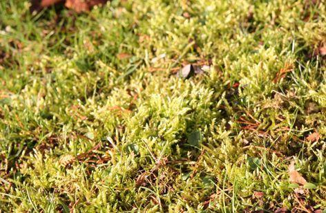 Rasen im Frühjahr richtig pflegen!