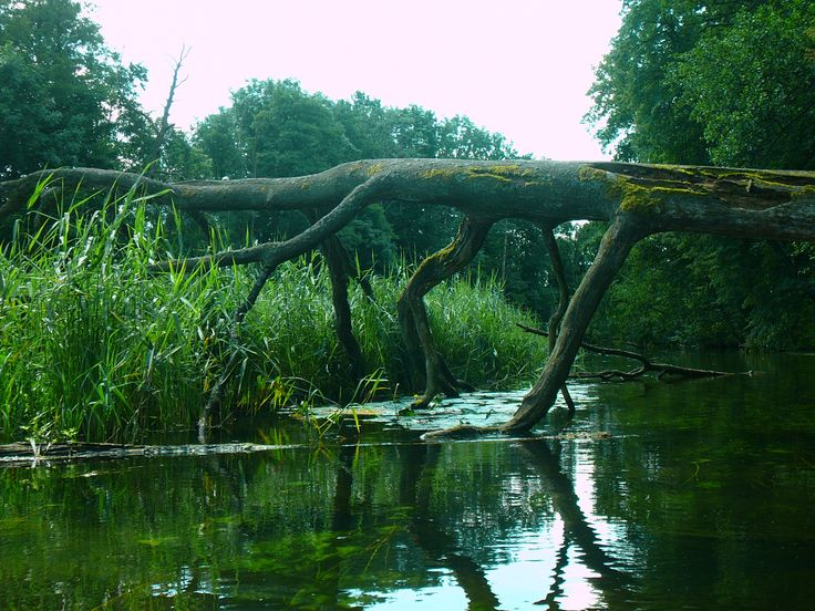 Mazury - Krutynia river