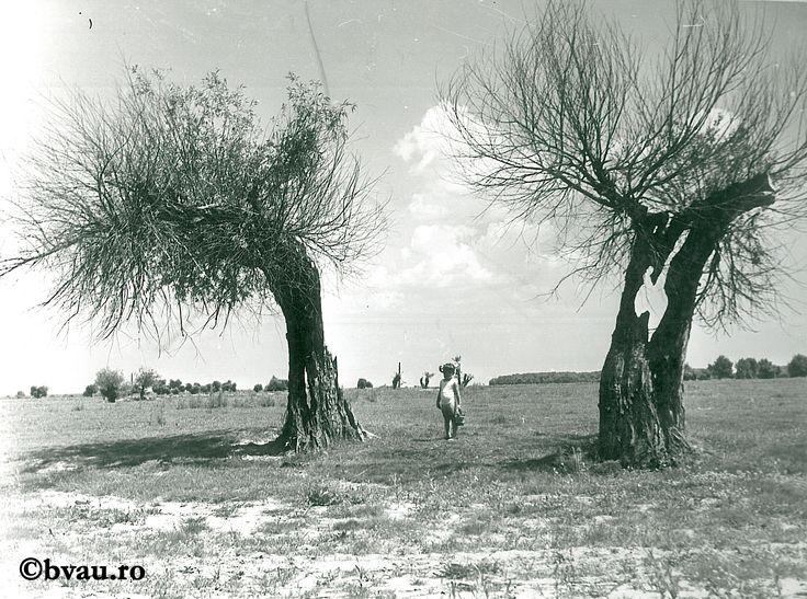 """Vara la Zaclău II / Năstase Marin .- Galaţi, 1970. Imagine din colecțiile Bibliotecii """"V.A. Urechia"""" Galați."""