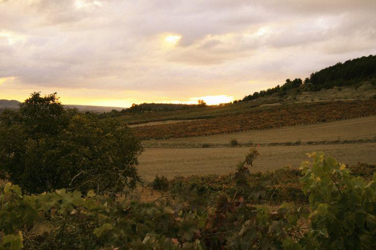 Atardecer en Finca Allende. Finca Allende´s evening. Cool, right?