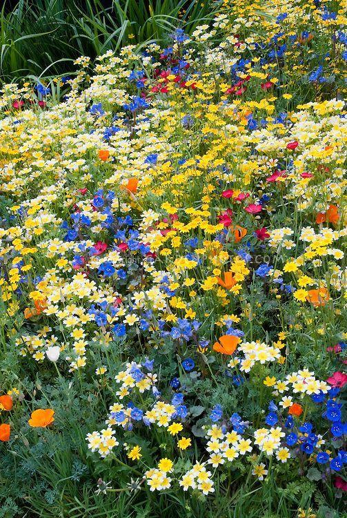 Flores do Campo - Equilíbrio, ponderação.                                                                                                                                                      Mais