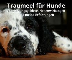 #Traumeel für Hunde, #Anwendungsgebiete, meine #Erfahrungen bei nahezu keinen…