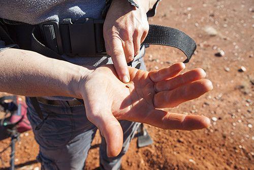 Gold nugget found in Western Australia 2014.