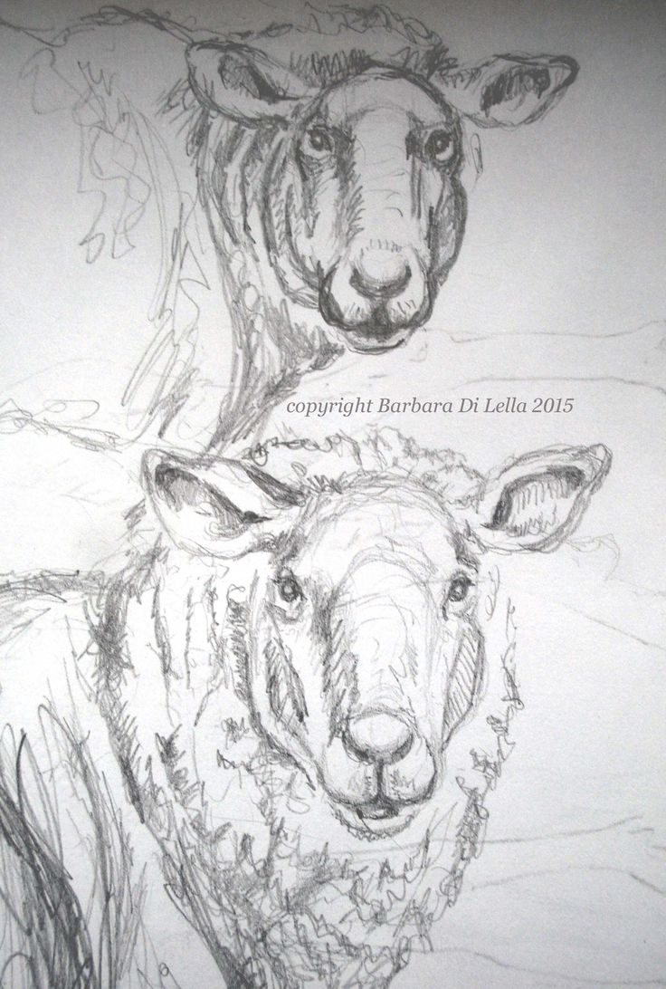 From my scribbling pencil lines, emerges some sheep drawings that will potentially see completion. #originalsheepdrawing #animaldrawing #farmanimalsketch