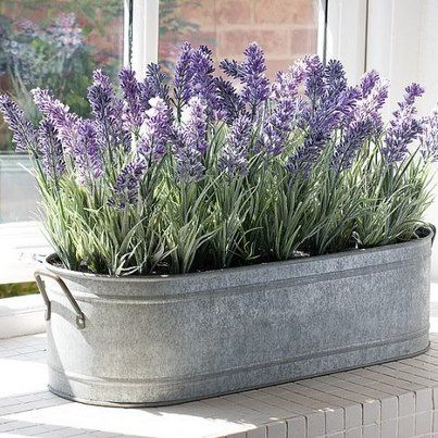 lavender in zinc container