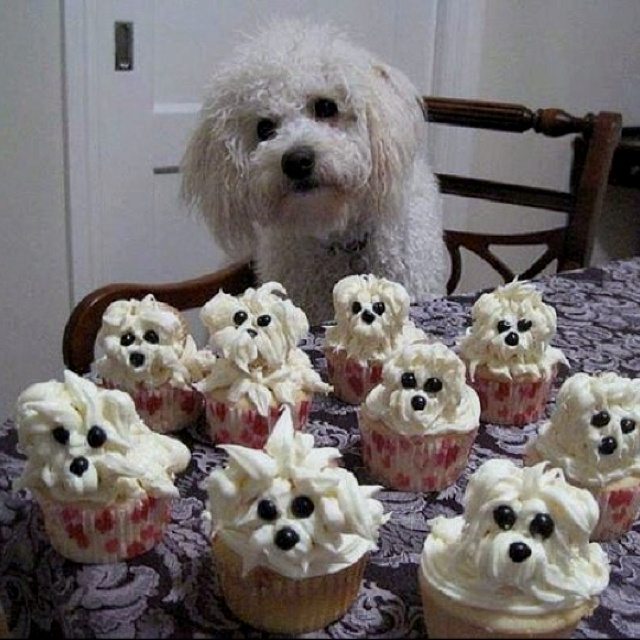 Dog Shaped Cake Images : Dog shaped cupcakes!! These look like Belle! Cupcake ...
