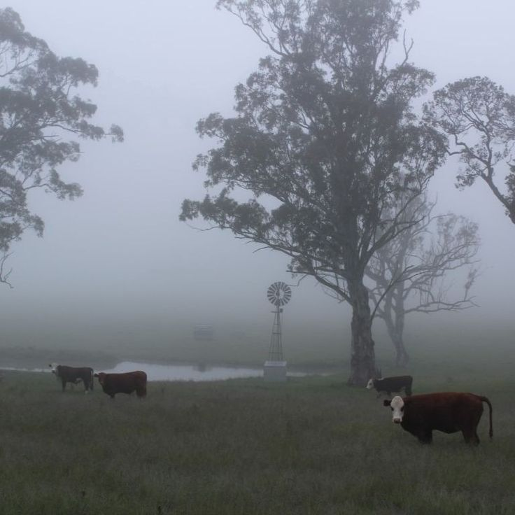 I love a misty, rainy morning in the country.  #startthedaywithsomethingbeautiful