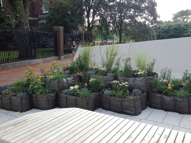 Our BACSAC planters part of the renovation of the Plaza at Harvard University.  Purchase our BACSAC planters at http://loopeedesign.com/index.php/perigot-bacsac-sitonit-fluxchair-authentics-buzzyspace-bobles-bensimon/bacsac.html