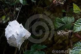 Google Image Result for http://thumbs.dreamstime.com/x/spiders-nest-7802045.jpg