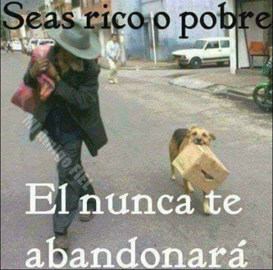 Seas rico o pobre ..... Él nunca te abandonará #FelizSábado  #fotos #foto #frases #sabado #perro #perros #animales #animal #mascota #mascotas #amor