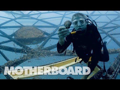 (1) Deep Sea Fish Farming in Geodesic Domes: Upgrade - YouTube
