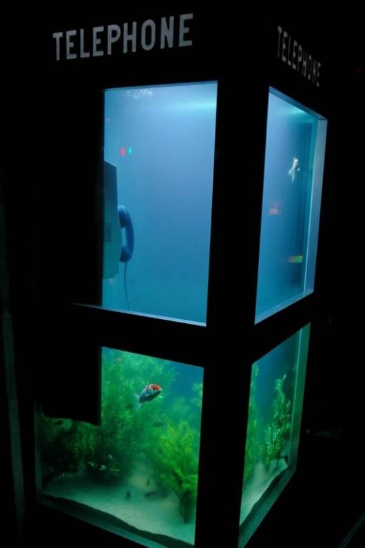 telephone booth aquarium