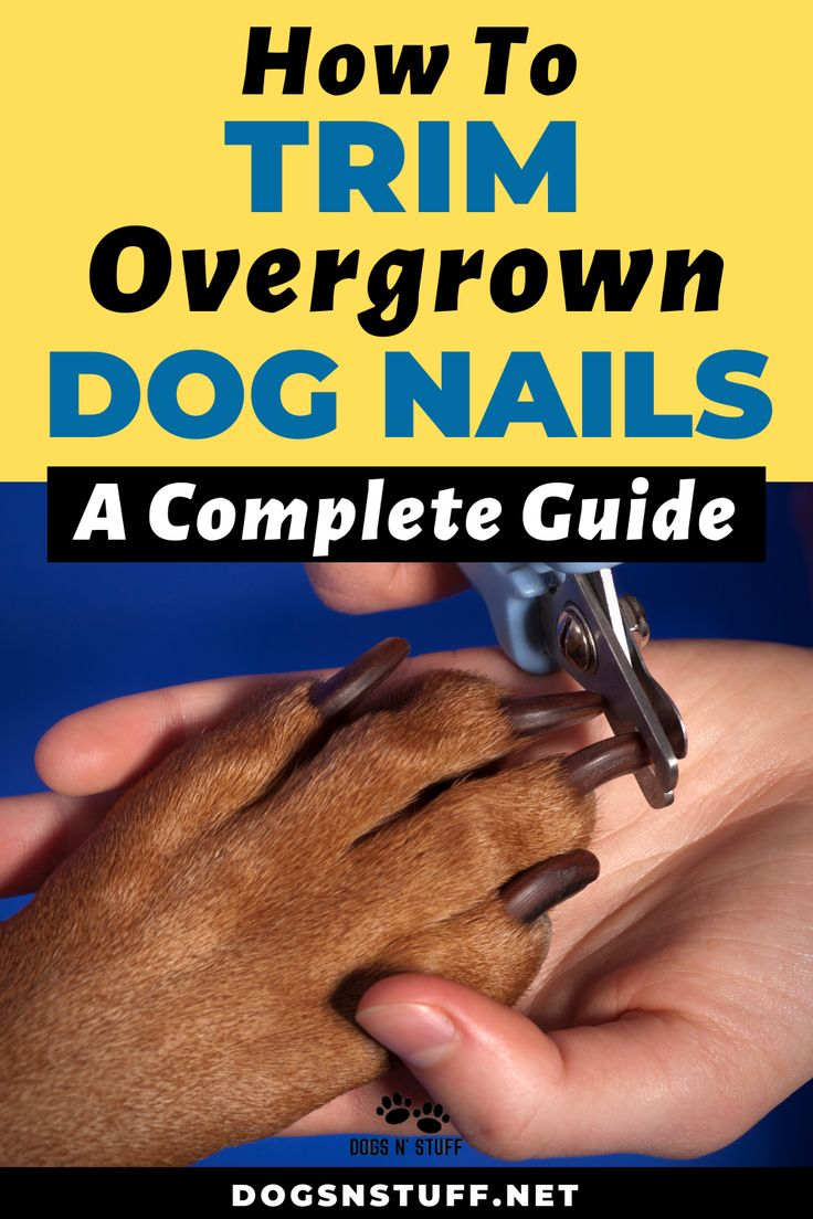 How to trim overgrown dog nails a complete guide with